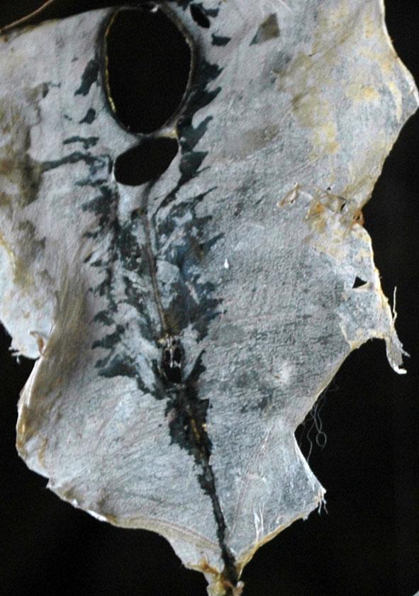 peau de maquereau